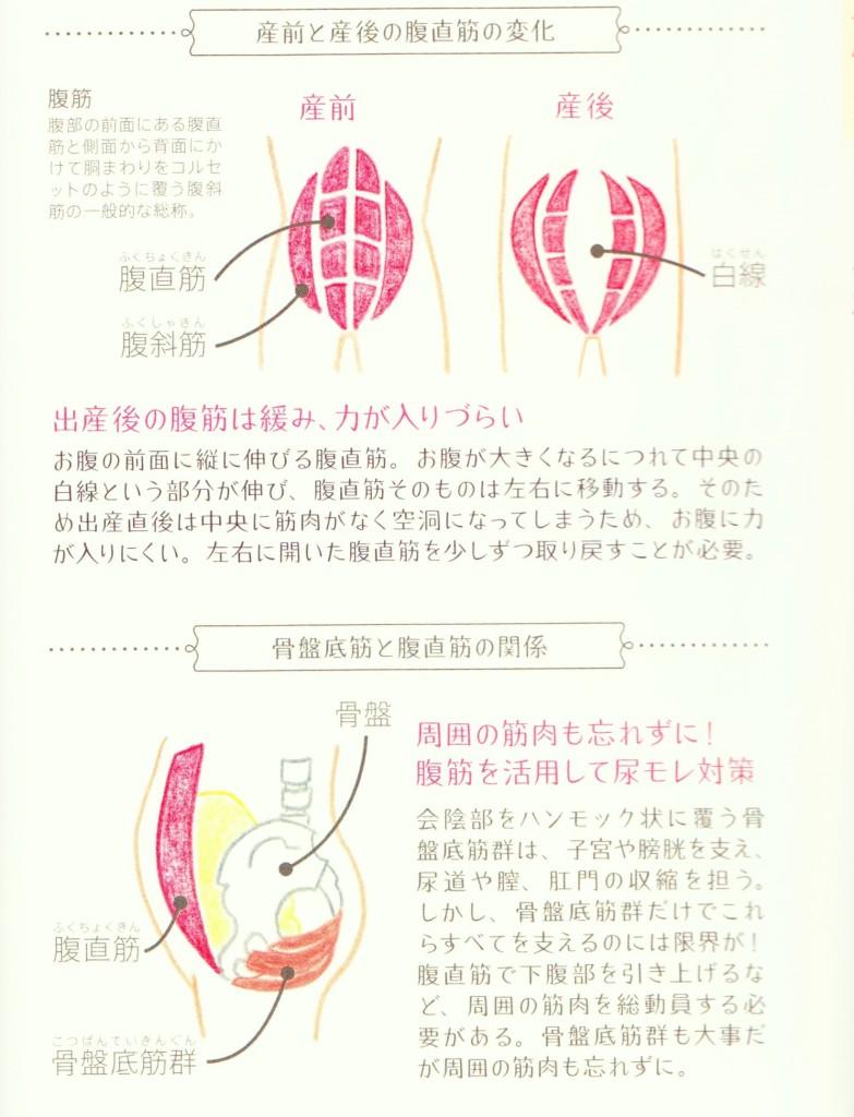 ブログ用 産後 筋肉 001